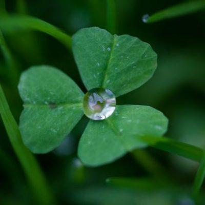 Узел «Цветок клевера» на удачу