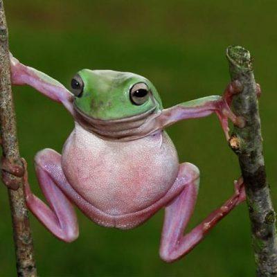 Мудрость от лягушки