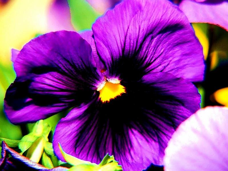фиолетовый цвет фото: