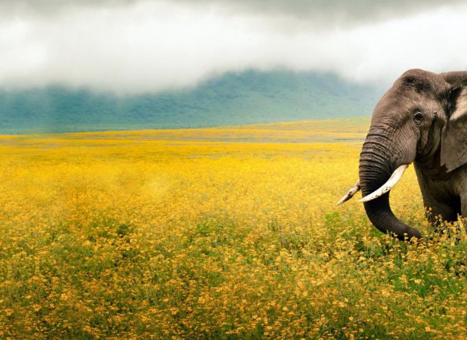 Зороастрийский гороскоп. Слон