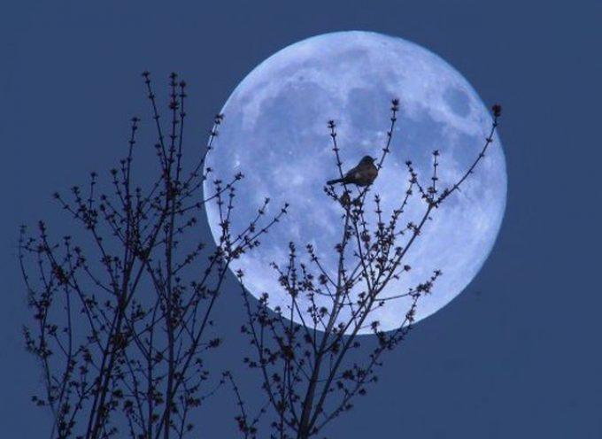 Голубая Луна. Полнолуние 21 августа 2013