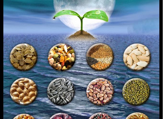 Тест «Луна семян. Время строить планы»