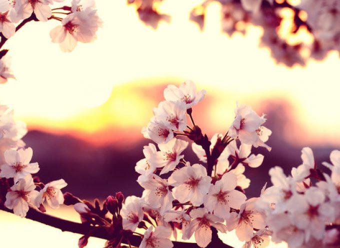 Прекрасные цветы среди пожара: Венера в аспектах 10 -19.04.14