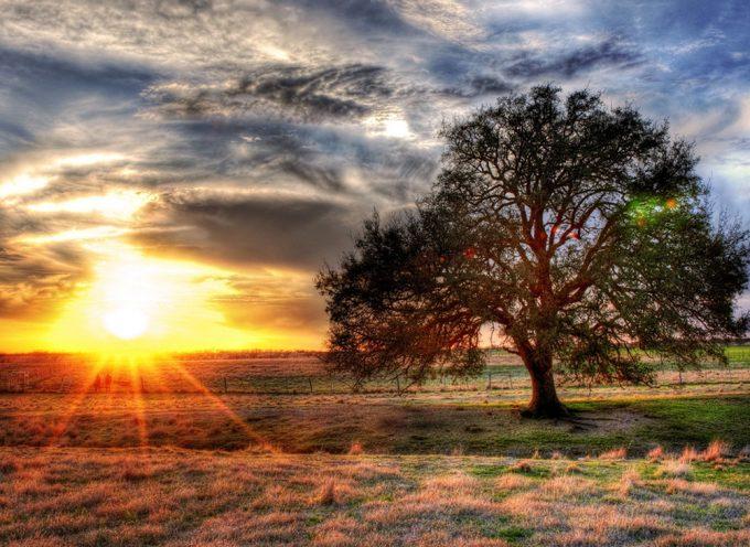 4 лунный день. Дерево Рода