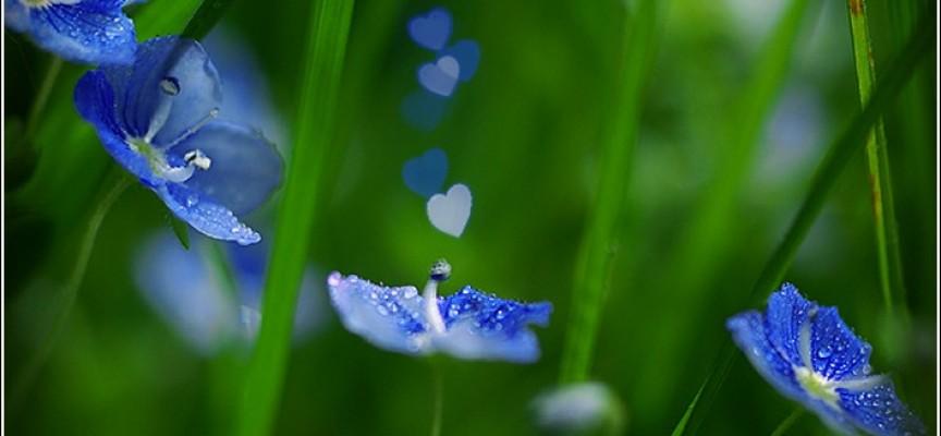 Амулеты растений кипит антифриз в чери амулет