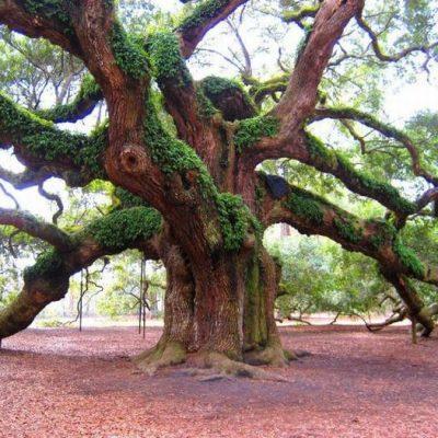Магические свойства деревьев и обереги из них