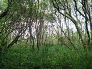 wet-woodland
