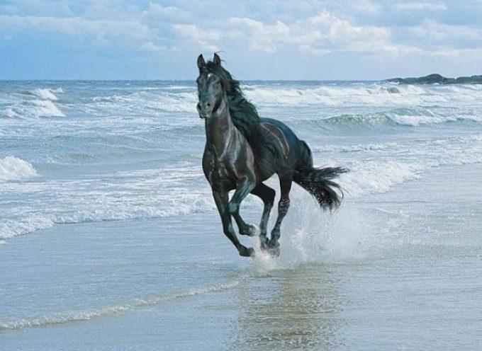 Лошадь как символ