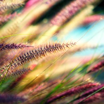 Время и правила сбора трав для магических целей