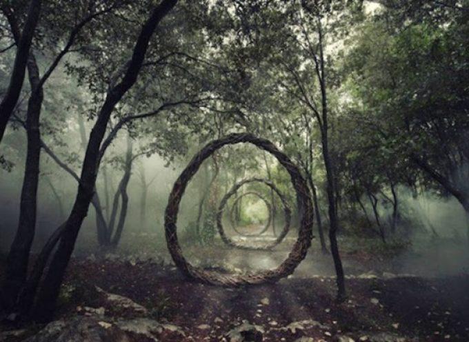 Заколдованный лес от британского художника