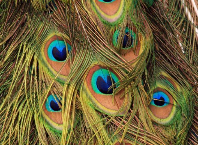 Перья птиц в магии
