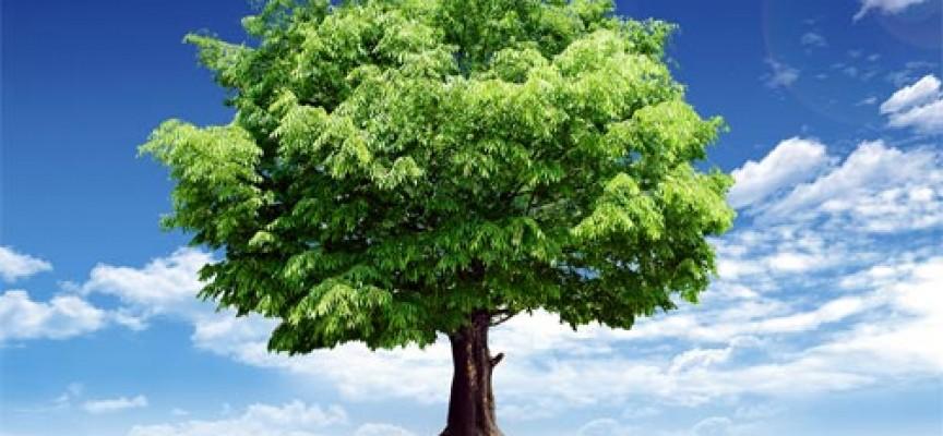 Знаки Зодиака и их деревья