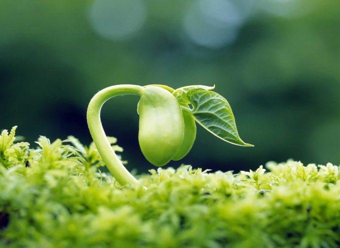 Ритуал «Посадка семян намерений»