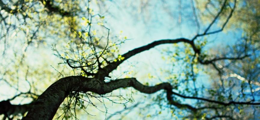 Деревья продлевают жизнь человека