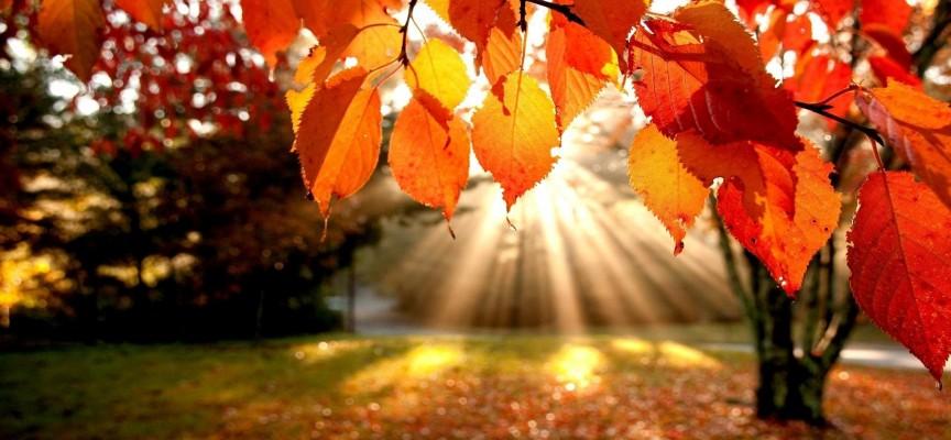 Солнце светит всем: астропрогноз на неделю 9 — 15 ноября