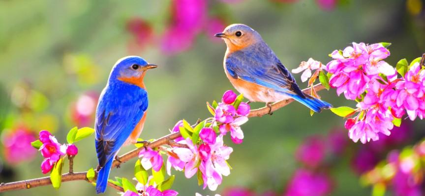 http://shuwany.ru/wp-content/uploads/2016/03/spring-06-864x400_c.jpg