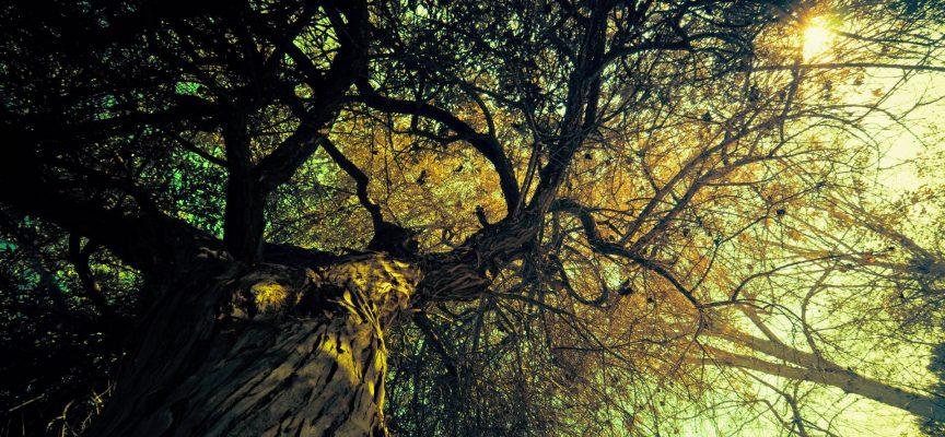 Отрыв от корней