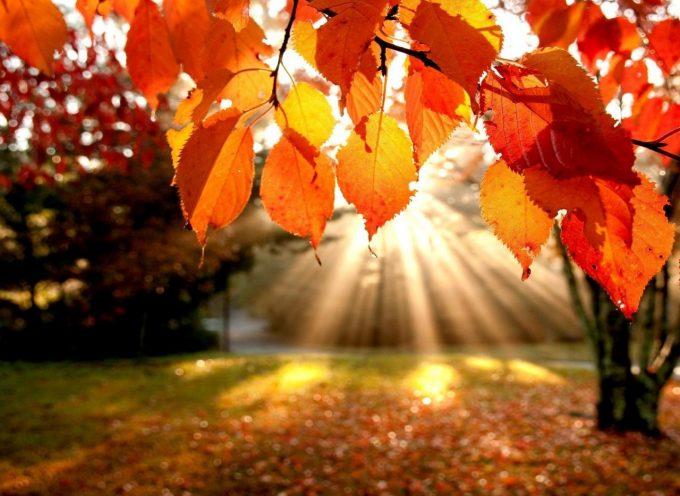 Гадание на осенних листьях «Что принесет осень»
