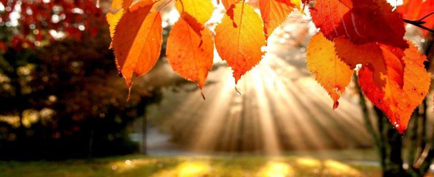 Гадание «Что принесет осень»