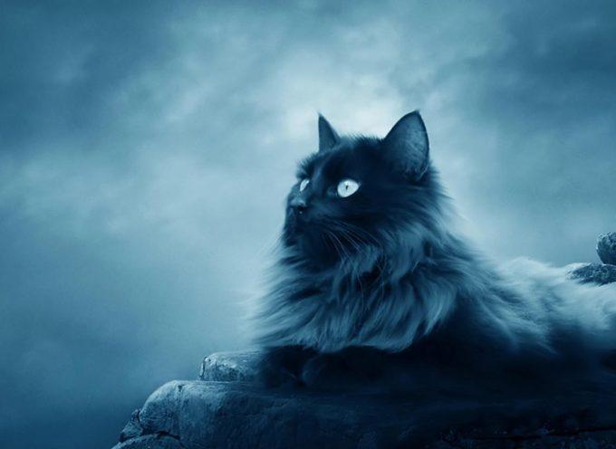 Магия кошек: почему кошка пришла именно к вам?