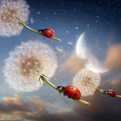 29 ноября – новолуние в Стрельце – летать и набираться сил )