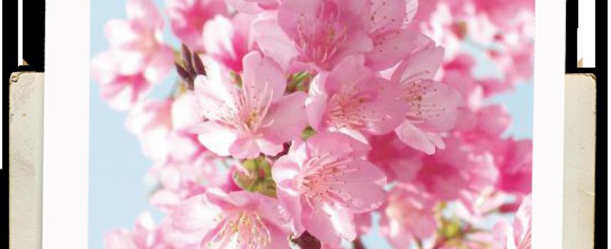 Гадание «Что вас ждёт этой весной»