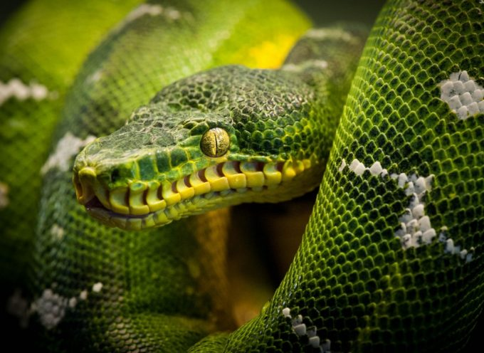 Змеиное многообразие