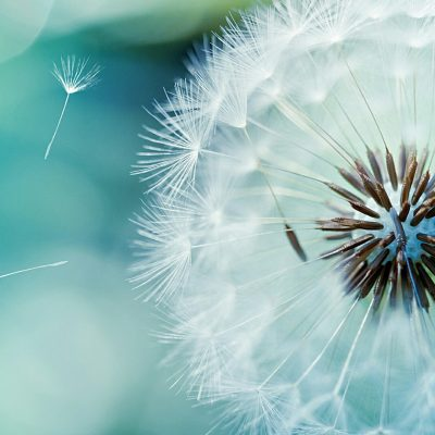 Растения Воздуха