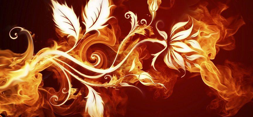 Растения стихии Огня