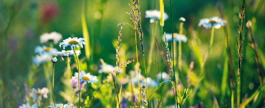 Травы для магических целей