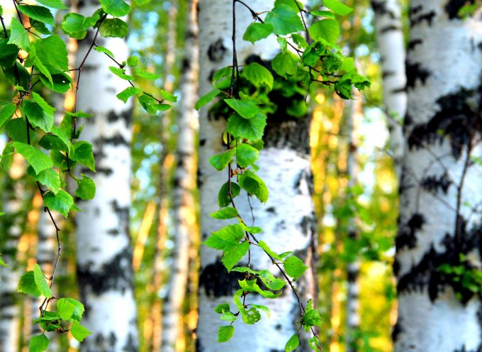 Магия деревьев. Растения стихии Земли