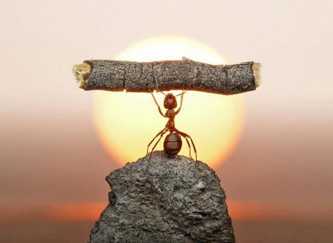 Время муравья: прогноз на 31 августа