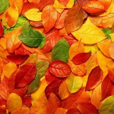 Осенние гадания на листьях