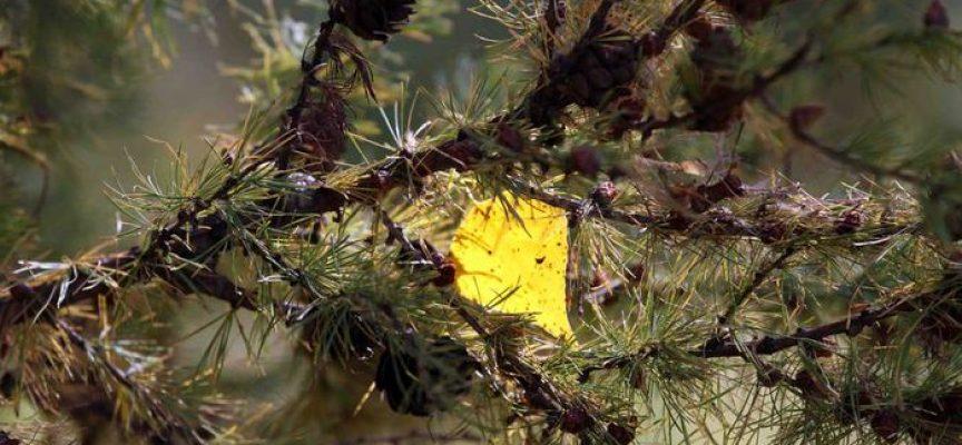 Сбор растительного сырья в сентябре