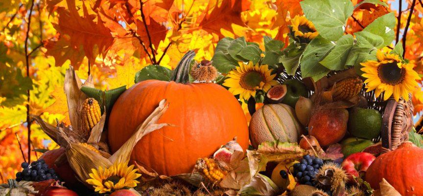 Время урожая: прогноз на 20 сентября