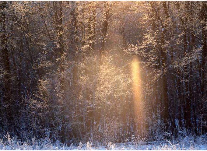 Лучик солнца: прогноз на 29 ноября