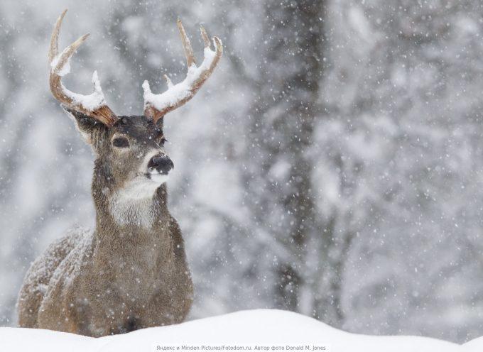 Время передышки: прогноз на 14 декабря