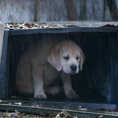 Заговоры для возвращения пропавшего животного
