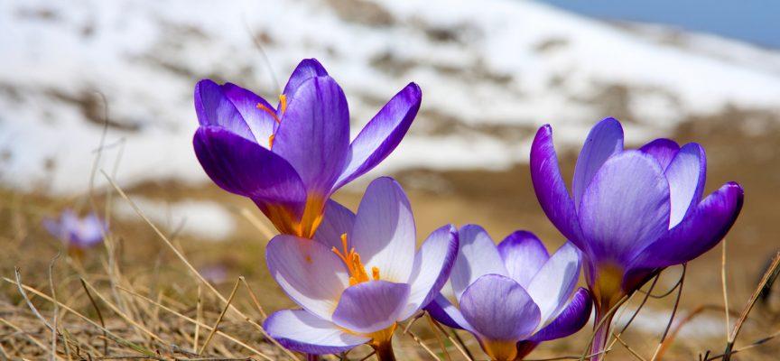 Время весны! Прогноз на неделю с 26 февраля по 4 марта