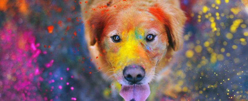 Время Собаки: прогноз на выходные 16-18 февраля