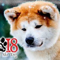 Гадание на 2018 год «Что готовит вам год собаки»