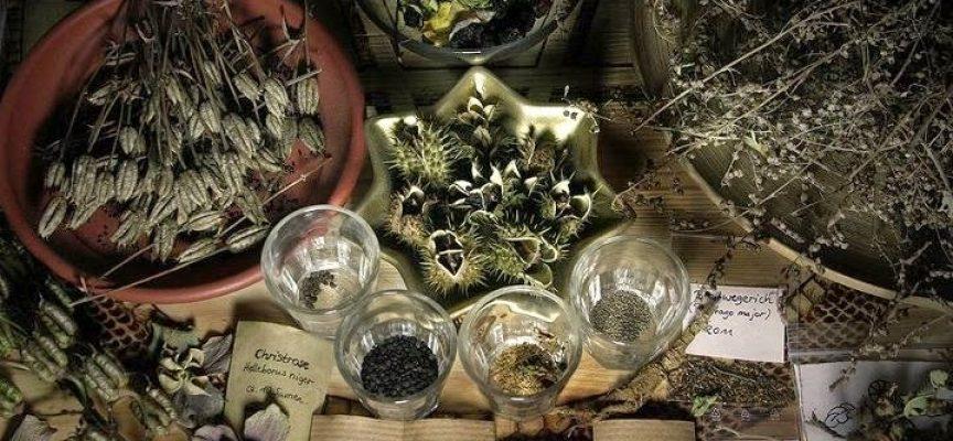 Травы для окуривания помещения