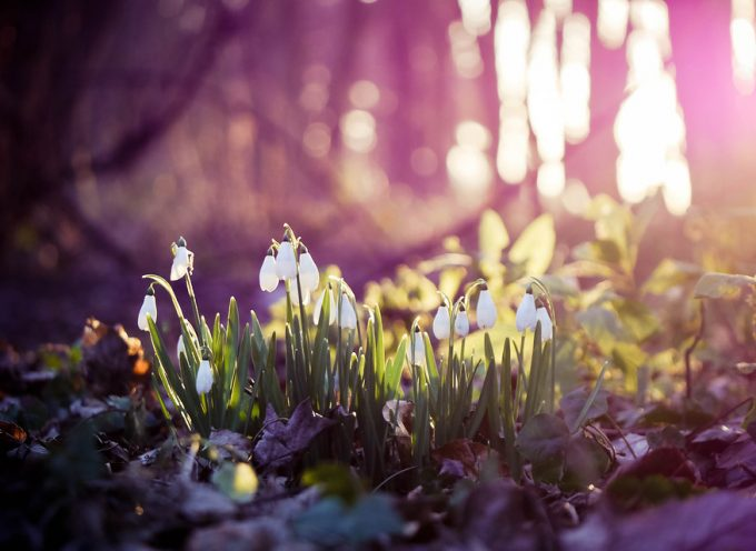 Весенний Солнцеворот: прогноз на 20 марта