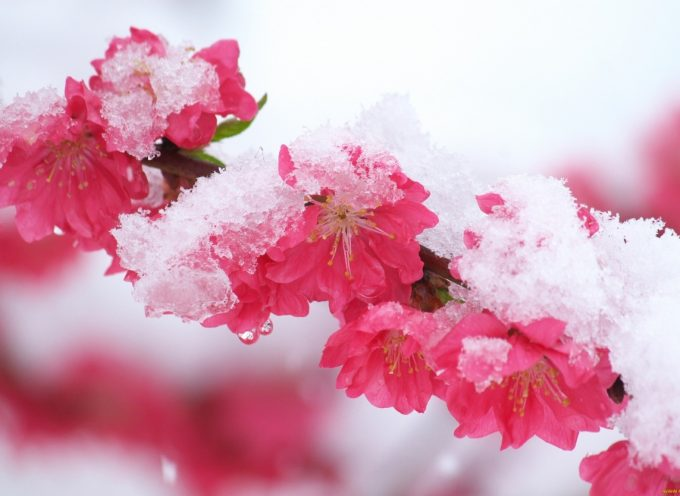 Время перемен: прогноз на неделю 26 марта — 1 апреля