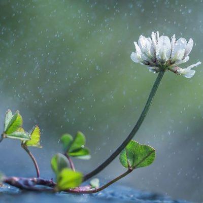 Приметы о растениях