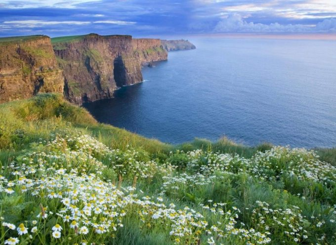 Травы Ирландии
