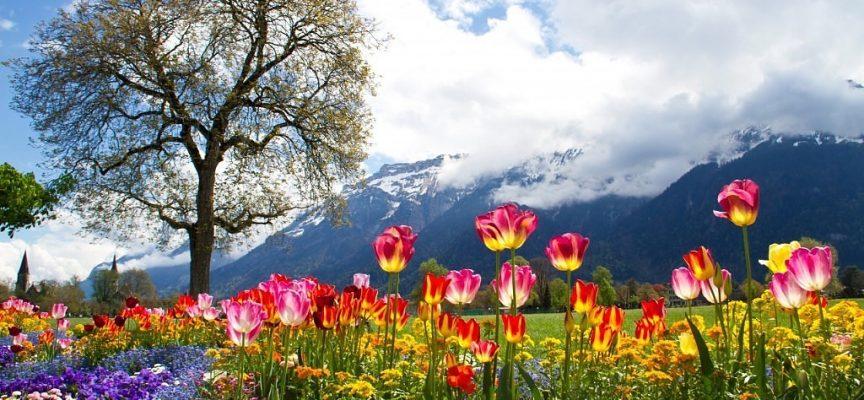 Время Новолуния и активного роста: прогноз на неделю 16-22 апреля