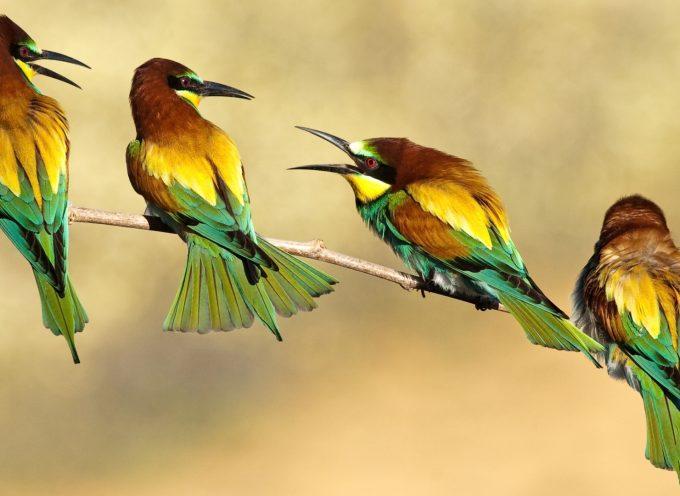 Приметы о птицах