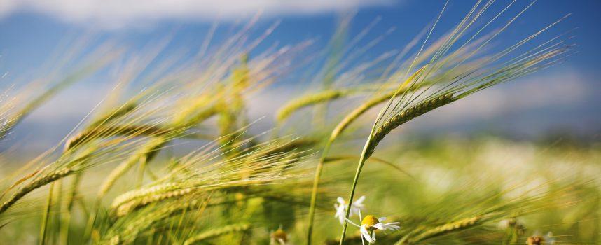 Время свежего ветра и Новолуния: прогноз на 14 июня