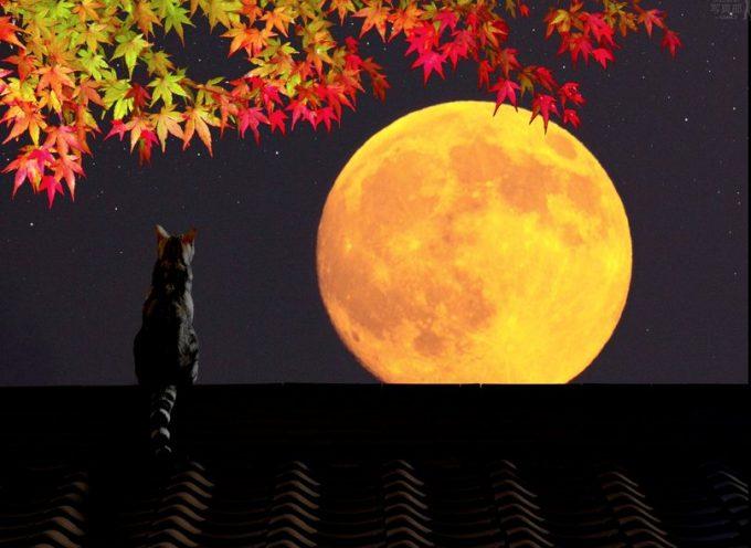 Луна без курса сентябрь 2018